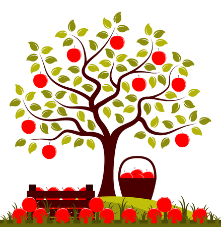 Vector apple tree, wooden crate of apples and basket of apples isolated on white background Illustration