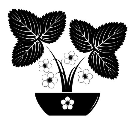白い背景に隔離されたボウルのベクトル開花イチゴ植物。