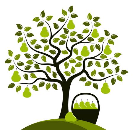 vector perenboom en mand met peren geïsoleerd op een witte achtergrond.