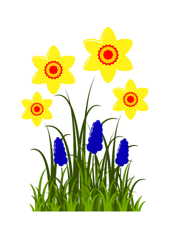 vector clump of daffodils and grape hyacinths isolated on white background