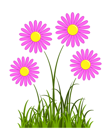 vector pink daisies in grass isolated on white background