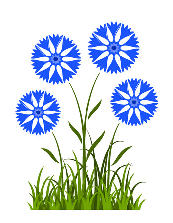 vector cornflowers in grass isolated on white background