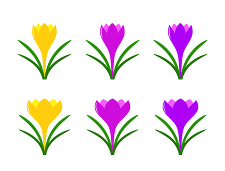 vector collection of crocuses isolated on white background