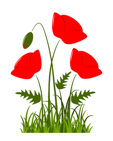 vector clump of corn poppies in grass isolated on white background Illustration
