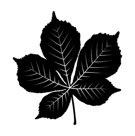vector chestnut tree leaf isolated on white background