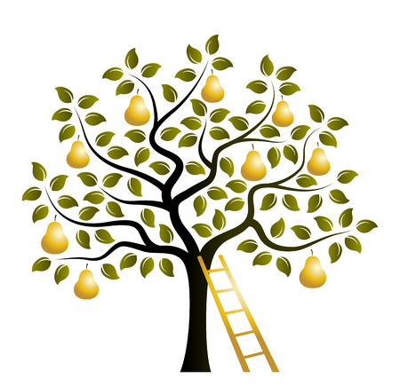 vector pear tree with golden pears and ladder isolated on white background Векторная Иллюстрация