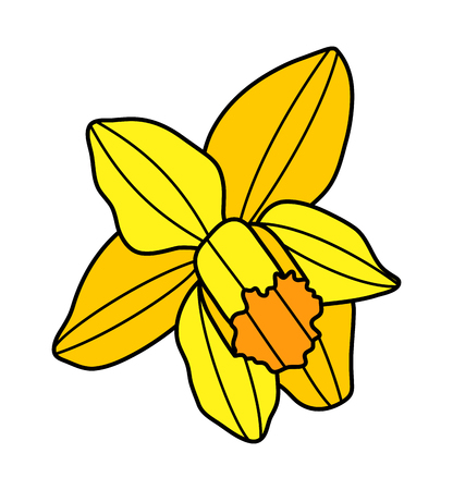 Vektor-Narzissenblume isoliert auf weißem Hintergrund