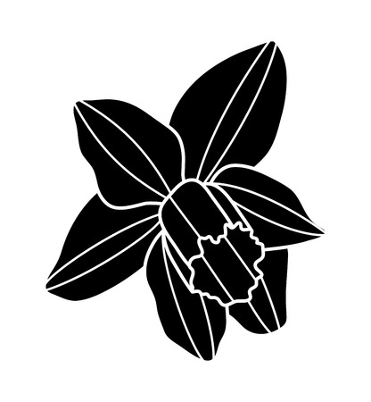 vector daffodil flower isolated on white background Illustration