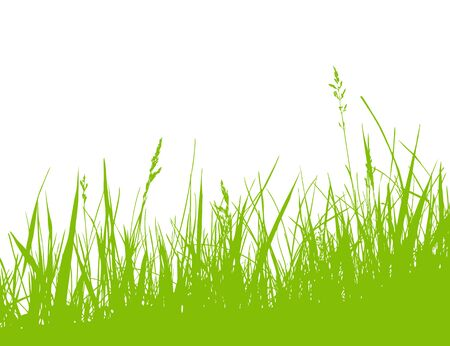 vector grass isolated on white background 向量圖像