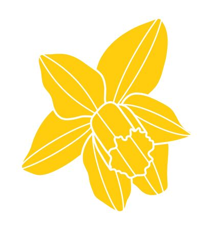 vector daffodil flower isolated on white background  イラスト・ベクター素材