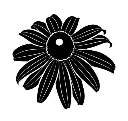 vector coneflower isolated on white background 일러스트