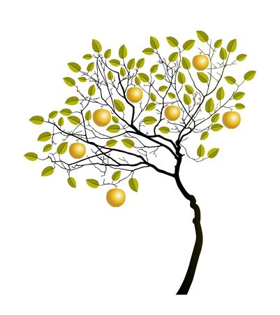vector apple tree with golden apples isolated on white background 일러스트