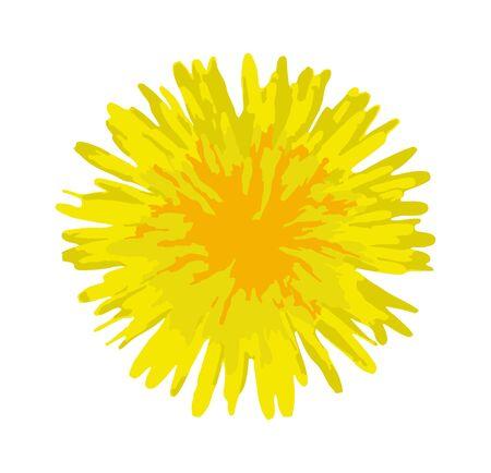 vector dandelion flower isolated on white background 일러스트