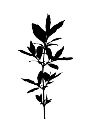 vector twig silhouette isolated on white background 일러스트