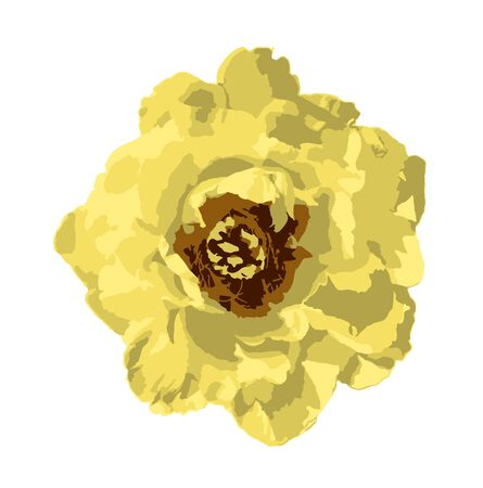 vector yellow peony flower isolated on white background