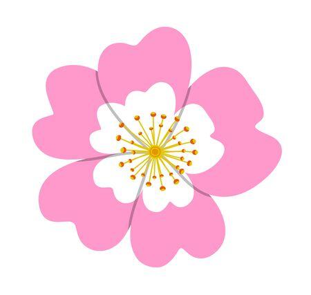vector dog rose flower (Rosa canina) isolated on white background
