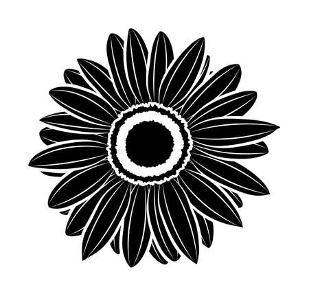 vector sunflower isolated on white background