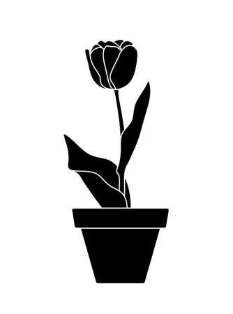 vector tulip in pot isolated on white background