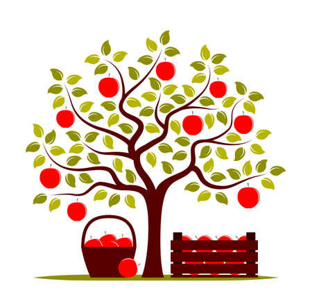 vector apple tree, wooden crate of apples and basket of apples isolated on white background 일러스트