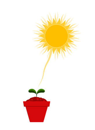 vector plant in pot and sun isolated on white background