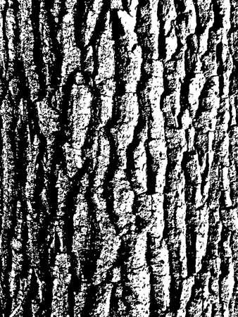 vector black and white texture of oak tree bark