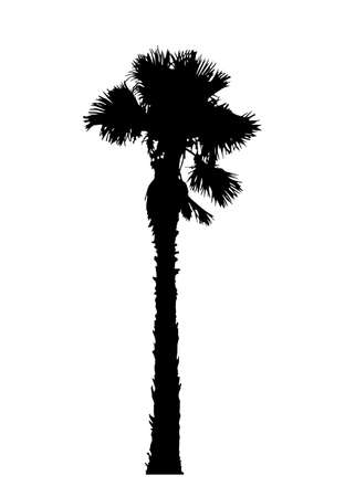 vector palm tree silhouette isolated on white background