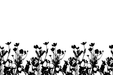 vector seamless buttercup flowers - hairy buttercup (Ranunculus sardous) border isolated on white background