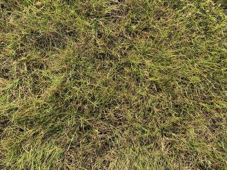 closeup of green grass texture Banco de Imagens
