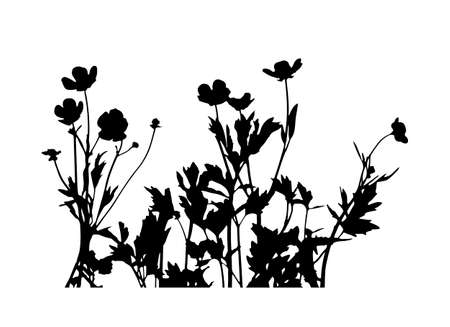 vector buttercup flowers - hairy buttercup (Ranunculus sardous) silhouette isolated on white background Ilustração