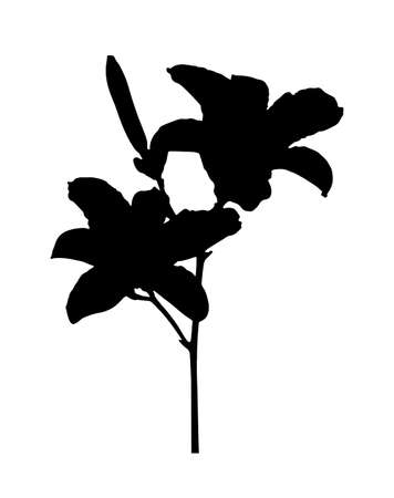 vector daylily flower silhouette isolated on white background Ilustração