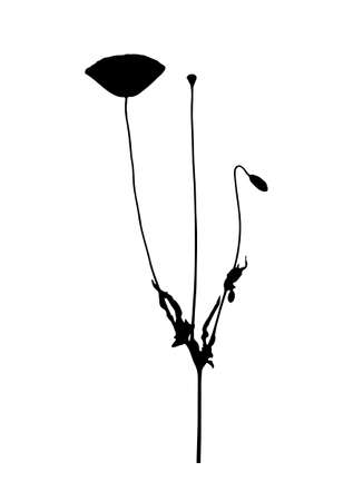 vector corn poppy (Papaver rhoeas) silhouette isolated on white background