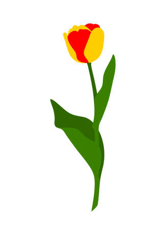 vector red and yellow tulip isolated on white background