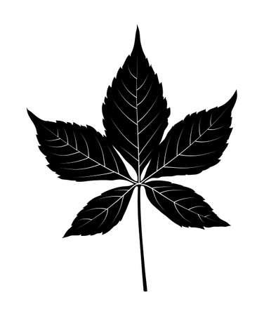 vector virginia creeper - victoria creeper - five-leaved ivy (Parthenocissus quinquefolia) leaf silhouette isolated on white background