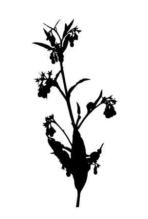 vector comfrey (Symphytum officinale) silhouette isolated on white background Ilustração