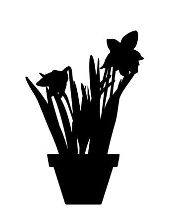 vector daffodil in pot silhouette isolated on white background Ilustração
