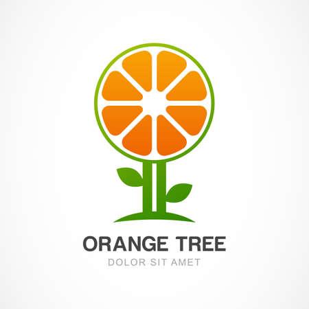 orange tree: Vector  design template. Orange tree illustration. Garden, organic or ecology icon.