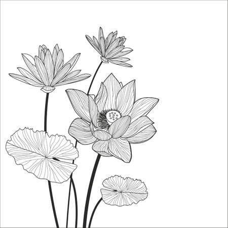 Beautiful lotus flower line illustration. Vector abstract black and white floral background with place for text.