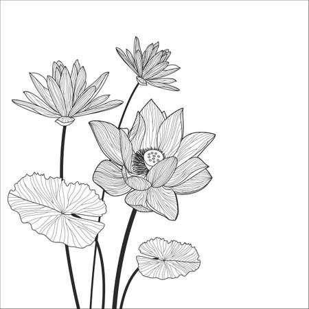 ramo de flores: Loto hermoso ilustraci�n l�nea flor. Resumen de vectores de fondo floral blanco y negro con el lugar de texto. Vectores