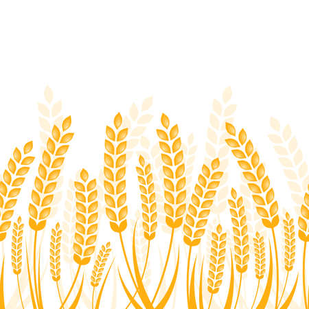 fields: Vector seamless horizontal background with golden ripe ear of wheat. Abstract concept for organic products, harvest, grain, bakery, healthy food. Illustration