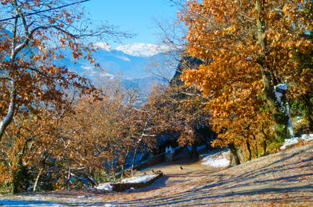 yellow trees: Meteora mountains in Greece. Winter mountains landscape. Sunshine autumn landscape with yellow trees. Nature background.
