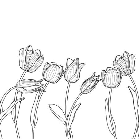 tulips isolated on white background: floral seamless horizontal pattern. Black and white elegant background with tulip flowers. Design for beauty salon, invitation, spring greeting cards. Illustration