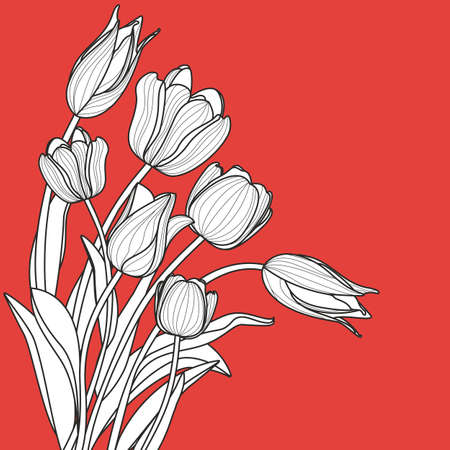 white tulip: Beautiful white tulip flowers bouquet on red background. line illustration with copy space Spring background for greeting cards, textile print, and decoration.