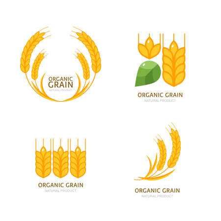 grain: Set of organic wheat grain icons.