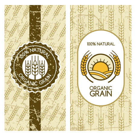 wheat harvest: Set of vector backgrounds for label, package, banner. Seamless grunge pattern with wheat grain. Concept for organic products, harvest and farming, grain, bakery, healthy food. Illustration