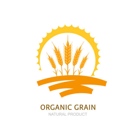 wheat grain: Wheat, barley, or rye ears, field and sun. Vector label, package design elements. Concept for agriculture, organic cereal products, harvesting grain and farming. Healthy food symbol.