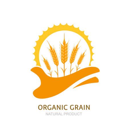 人間の手は、小麦の耳と太陽を保持しています。ベクトル ラベル、パッケージのデザイン要素です。大麦やライ麦のイラスト。農業、有機穀物製品