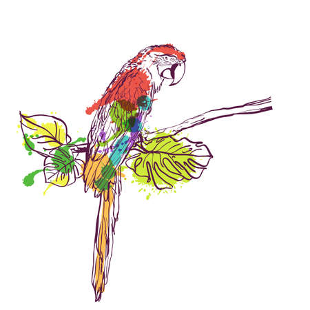 exotic fruit: Vector hand drawn watercolor illustration of tropical ara parrot. Colorful parrot bird sitting on branch with green leaves. Isolated design element for fashion print, label, package, background.