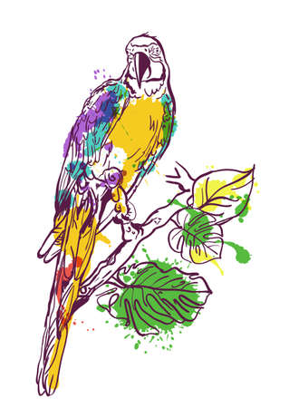 ara: Vector watercolor illustration of tropical ara parrot sitting on green tree. Isolated colorful parrot bird. Design element for print, label, package, background.
