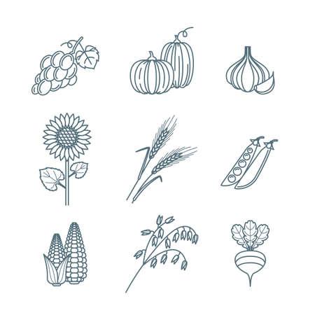 produits céréaliers: Vector contour des légumes et des céréales de grains icons set. la récolte d'automne art illustration ligne. Les éléments de conception pour l'agriculture, la récolte, les jardins, la ferme et l'agriculture des produits biologiques. Illustration