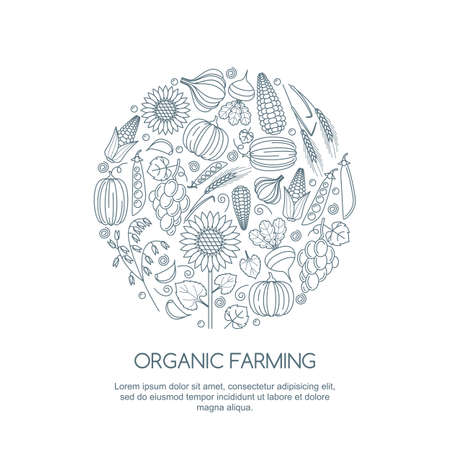 organic farming: Line art illustration of autumn harvest. Vector outline vegetables and cereal grains icons set. Design elements for agriculture, harvesting, gardens, farm and farming organic products.
